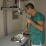 RTG diagnostika kočky