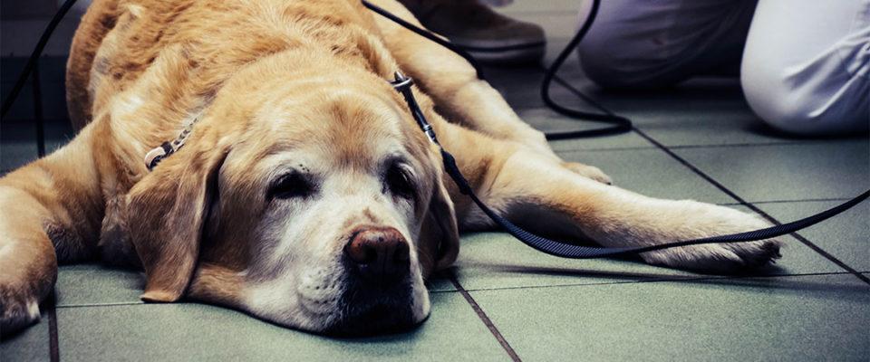ABClinic - veterinární klinika v Brně │ Profesionální péče v laskavých rukách