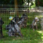 štěňata na zahradě čekají na vyšetření